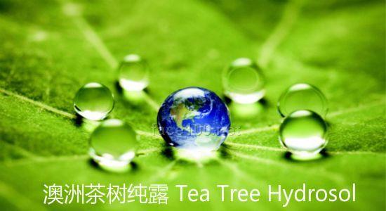 澳洲茶树纯露,澳大利亚茶树纯露代理批发