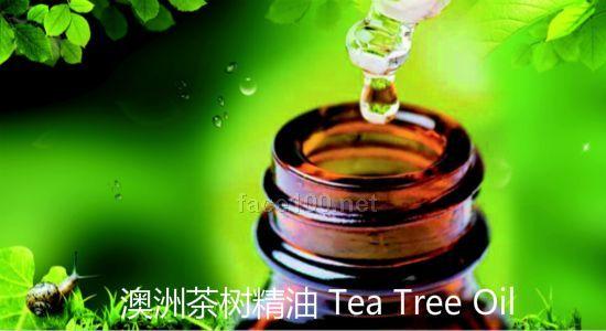 澳洲茶树精油、澳大利亚茶树精油原料提供代理批发