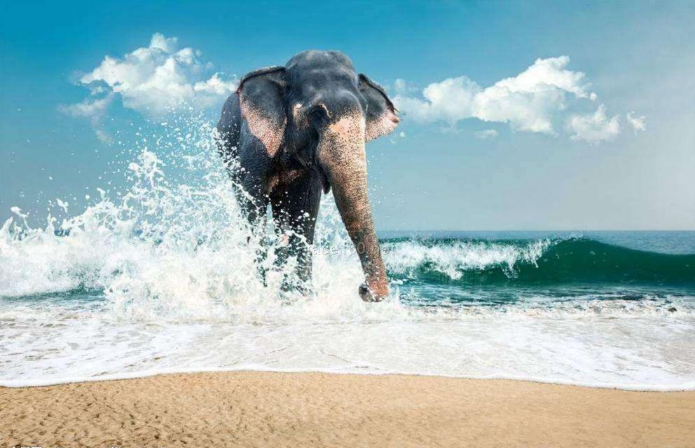 海波浪洗衣液海波浪